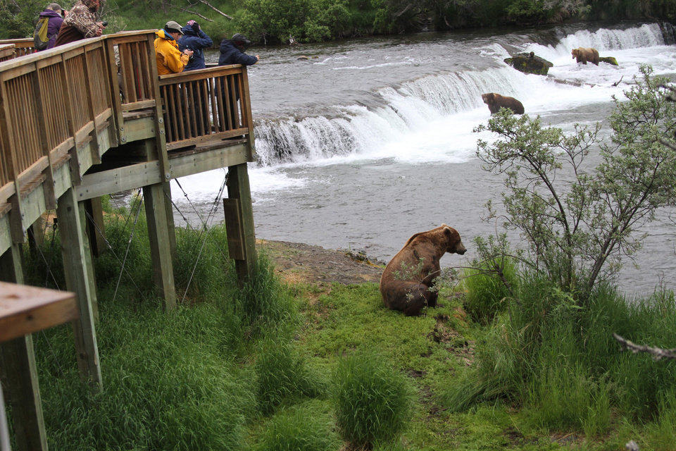 Photo - Visitors on a bear viewing platform at Brooks Falls watch two brown bears at the falls and one on the river bank in Katmai National Park and Preserve, Alaska on July 4, 2013. At the peak of the season, about late July, up to 70 bears, not counting cubs, will coexist with humans in a one-square-mile area. (AP Photo/Mark Thiessen)