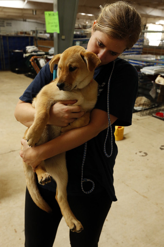 Photo - Volunteer Erin Brickman, Norman, kisses a puppy as she and other volunteers care for animals displaced by tornadoes that are being housed at a temporary shelter at the Cleveland County Fairgrounds. PHOTO BY STEVE SISNEY, THE OKLAHOMAN  STEVE SISNEY