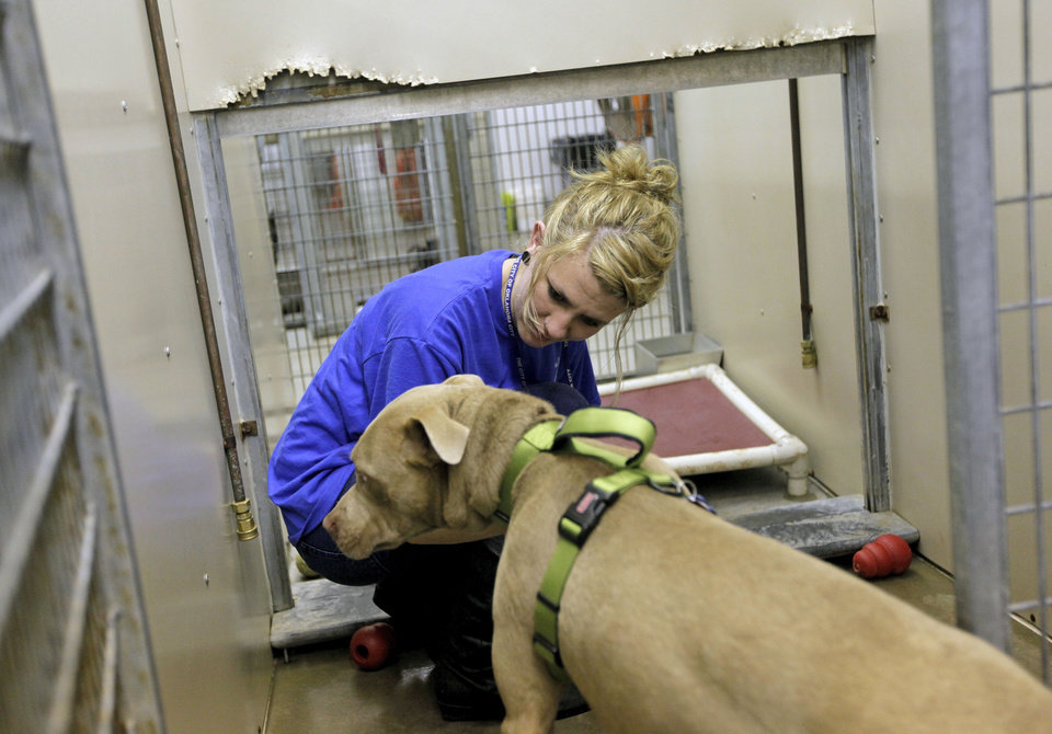 Photo - Adoption coordinator Tevin Garner coaxes Harold (A106678), a male pit bull, back into his kennel after visiting with a family who was considering adopting him at the Oklahoma City Animal Shelter this month.  NATE BILLINGS - The Oklahoman