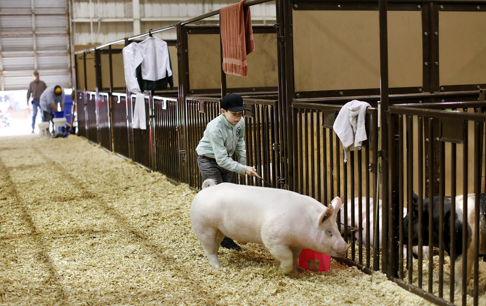 """Photo -  Hayden Harper, 9, uses a show stick to direct his hog, """"Duke"""",  to his stall after they finished practicing show techniques with his dad, Bart, before young Harper competes later in  the show ring at the Oklahoma Youth Expo at State Fair Park on Tuesday,   March 18, 2014. The dad and son are from Madill and Hayden is a member of the 4H Club. Harper is showing sheep and a heifer in addition to his hog this year.  Photo by Jim Beckel, The Oklahoman"""