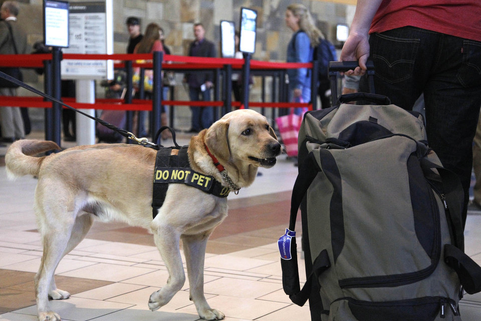 Explosives detection Labrador retriever K9 Rrall sniffs bags, passengers, and the air for the scent of explosives at Will Rogers Airport in Oklahoma City, Tuesday, Nov. 20, 2012, as travelers head out of town for the Thanksgiving holiday. (AP Photo/Sue Ogrocki)