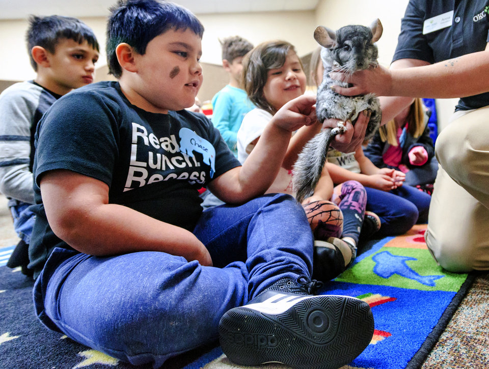 Photo - Chase pets a Chinchilla during a day camp at the Oklahoma City Zoo in Oklahoma City, Okla. on Monday, April 2, 2018.  The camps are available for state students that are out of school during the teacher walkout.   Photo by Chris Landsberger, The Oklahoman
