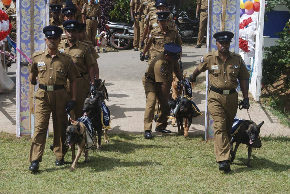 Photo - In this Monday, Aug.26, 2013 photograph, Sri Lankan policemen walk with sniffer dogs as they hold a wedding ceremony of nine pairs of police dogs in Kandy, Sri Lanka. Sri Lanka police have apologized for holding a wedding ceremony for sniffer dogs after the country's culture minister condemned the event and demanded an investigation. The dogs dressed in shawls, hats and socks were placed on a decorated platform like those used in traditional weddings in the ceremony Monday, part of a breeding program. They were later driven away in a decorated police jeep for their