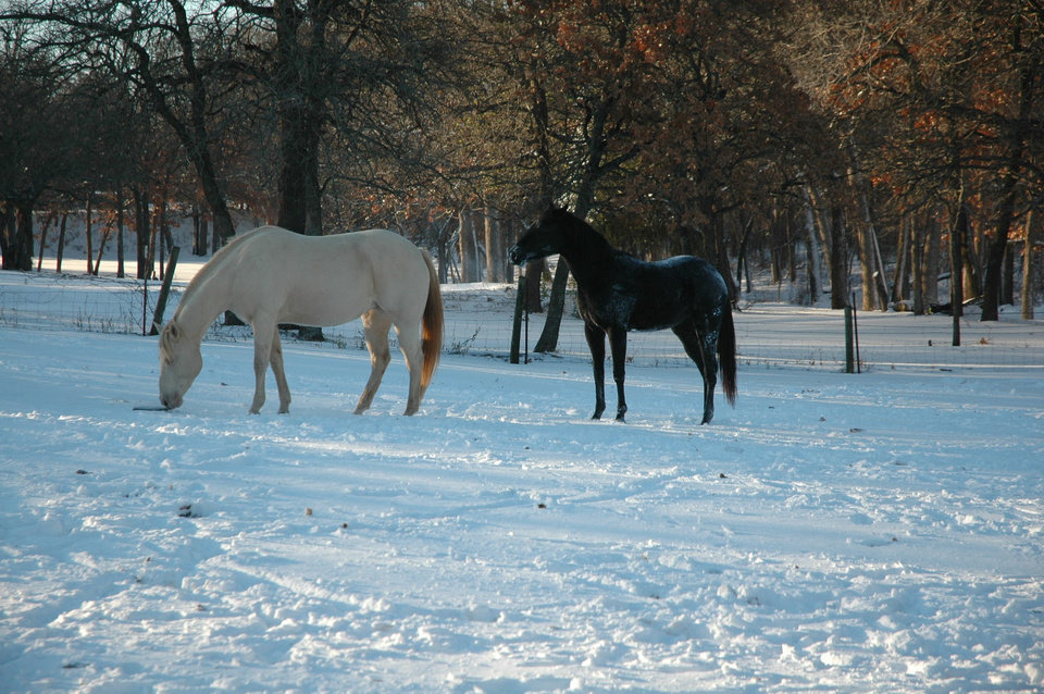 Our horses Ruby and Jet enjoying the snow<br/><b>Community Photo By:</b> Dan Bradley<br/><b>Submitted By:</b> Dan, Harrah