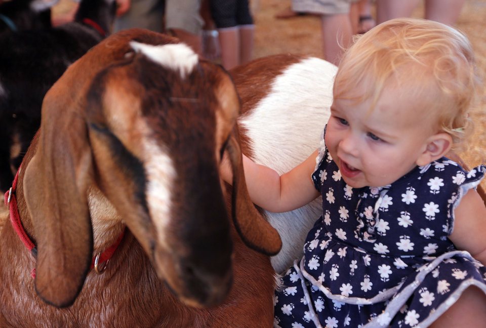 Photo - Ava Witt, 1, of Edmond, Okla., pets a goat during the last day of the Oklahoma State Fair in Oklahoma City, Sunday, Sept. 22, 2013. Photo by Sarah Phipps, The Oklahoman