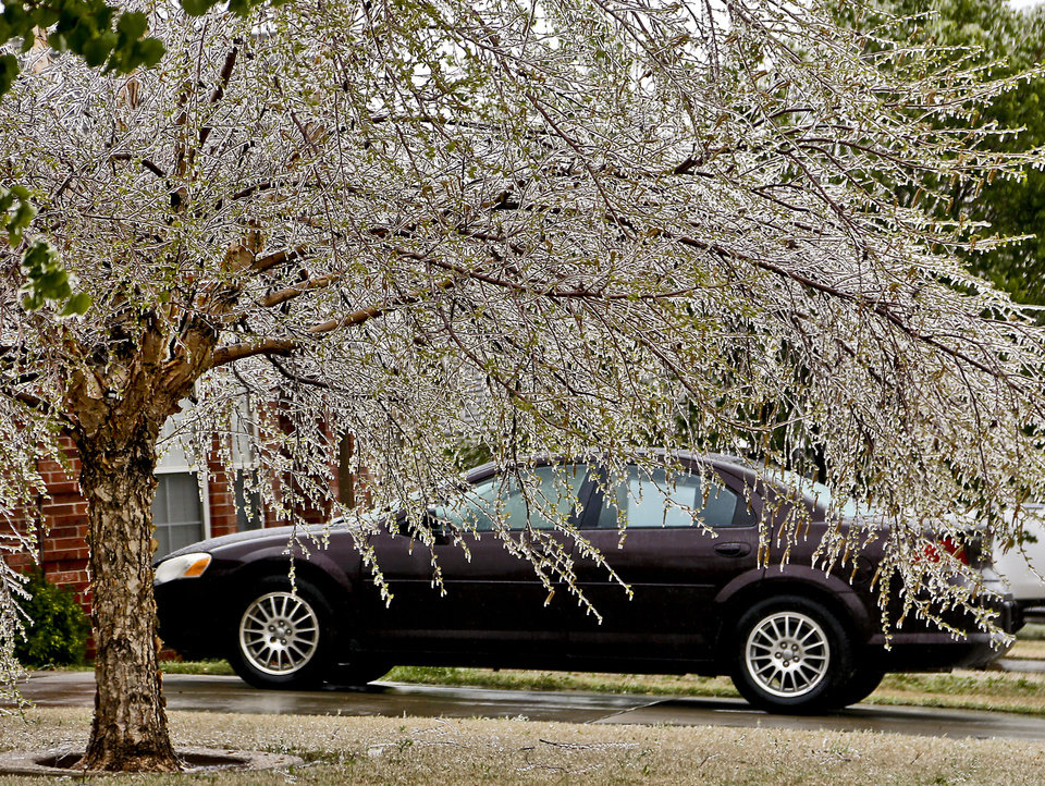 Ice-covered limbs begin to sag under the weight of ice on Wednesday, April 10, 2013, in Oklahoma City, Okla.  Photo by Chris Landsberger, The Oklahoman