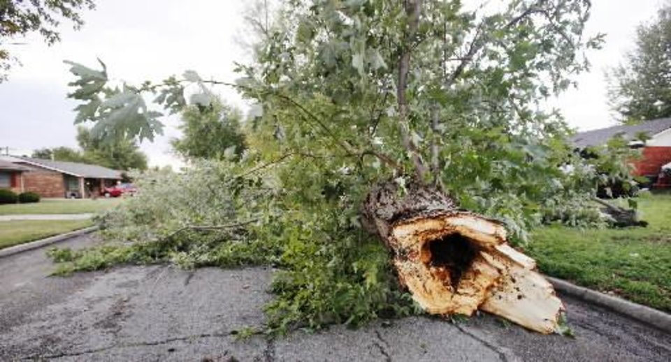 Photo - A tree downed during an early morning thunderstorm blocking the roadway in the 3600 block of Markwell Ave. in Bethany Wednesday, Sept. 5, 2012. Photo by Paul B. Southerland, The Oklahoman