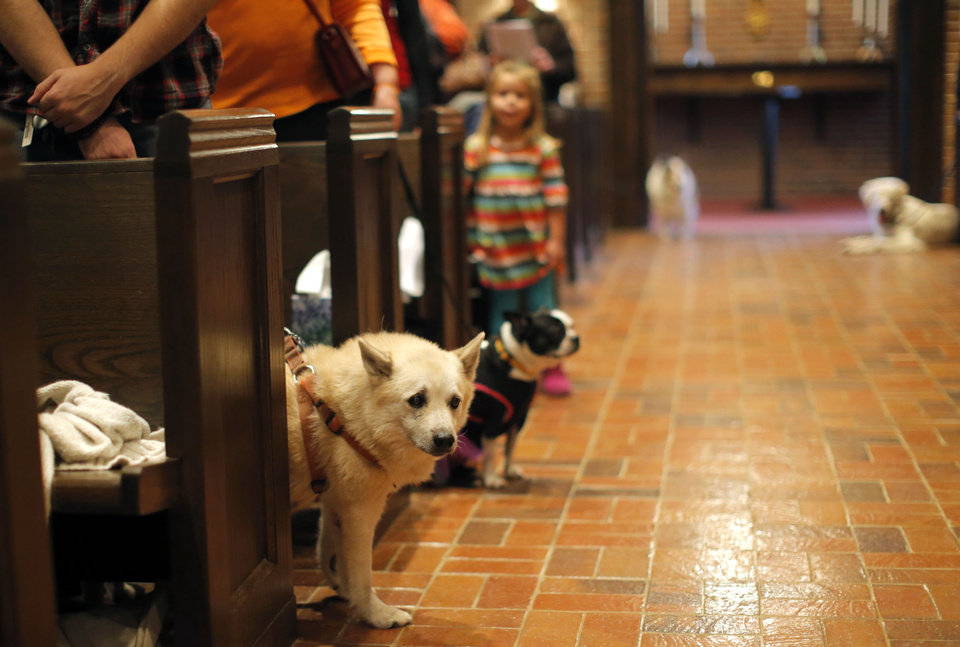 Dog stand in the isle as their owners pray during a service in Celebration of God\'s Creations with the Blessing of the Animals at St. Augustine of Canterbury Episcopal Church in Oklahoma City. Sunday, Oct. 7, 2012. Photo by Sarah Phipps, The Oklahoman