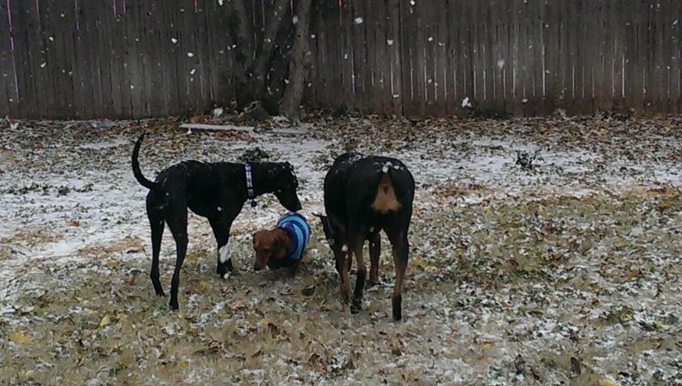 Photo - Snow in Oklahoma City. Photo by Grant Nixon