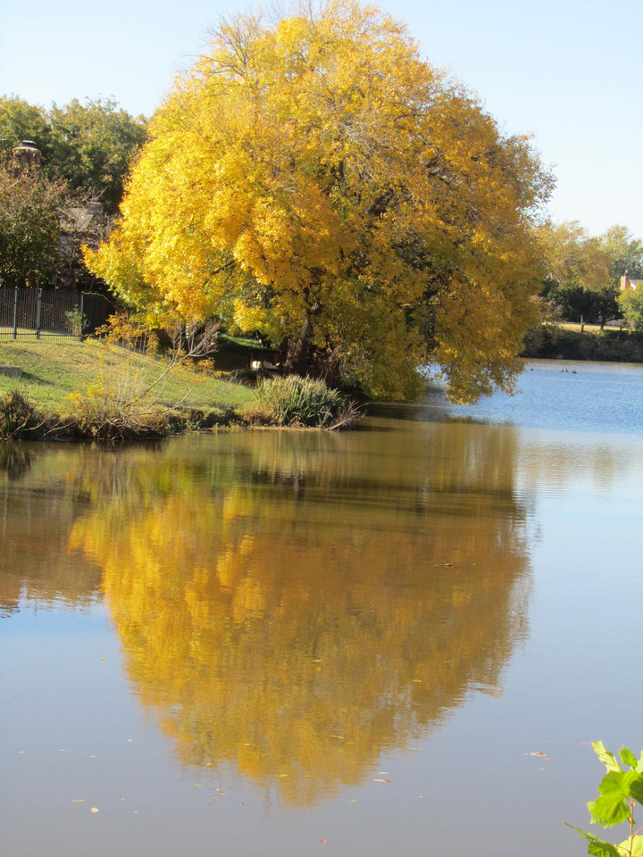 Love Lansbrook in OKC! Photo by Sharon McKay