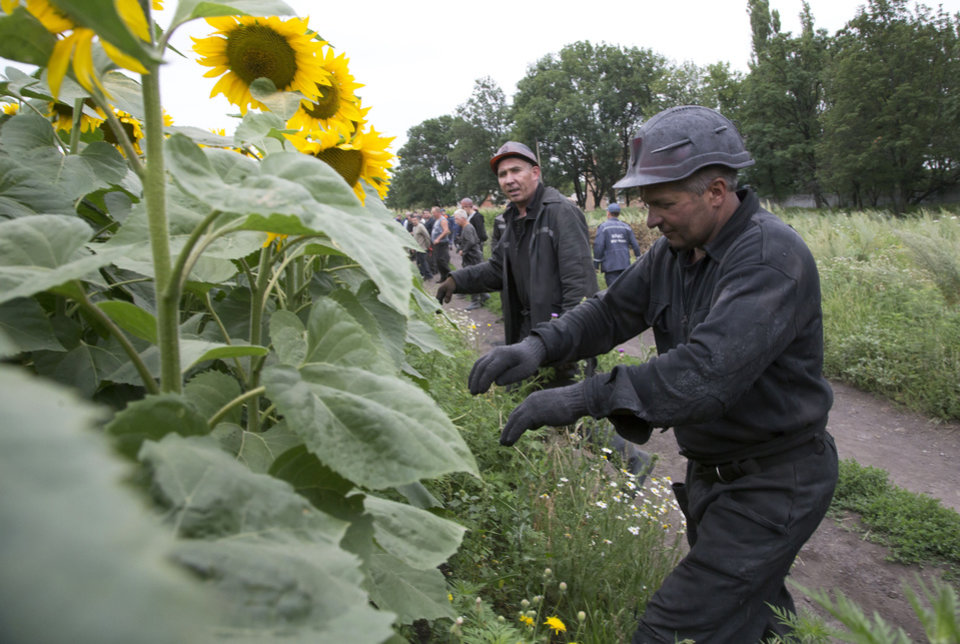 Photo - Ukrainian coal miners search the site of a crashed Malaysia Airlines passenger plane near the village of Rozsypne, Ukraine, eastern Ukraine Friday, July 18, 2014. Rescue workers, policemen and even off-duty coal miners were combing a sprawling area in eastern Ukraine near the Russian border where the Malaysian plane ended up in burning pieces Thursday, killing all 298 aboard. (AP Photo/Dmitry Lovetsky)