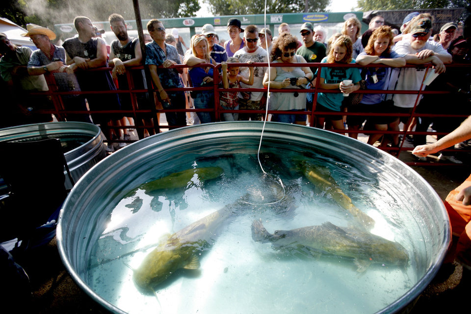Fans watch catfish swim in tanks after their during the Okie Noodling Tournament in Pauls Valley, on Saturday. (Photo by Bryan Terry, The Oklahoman)