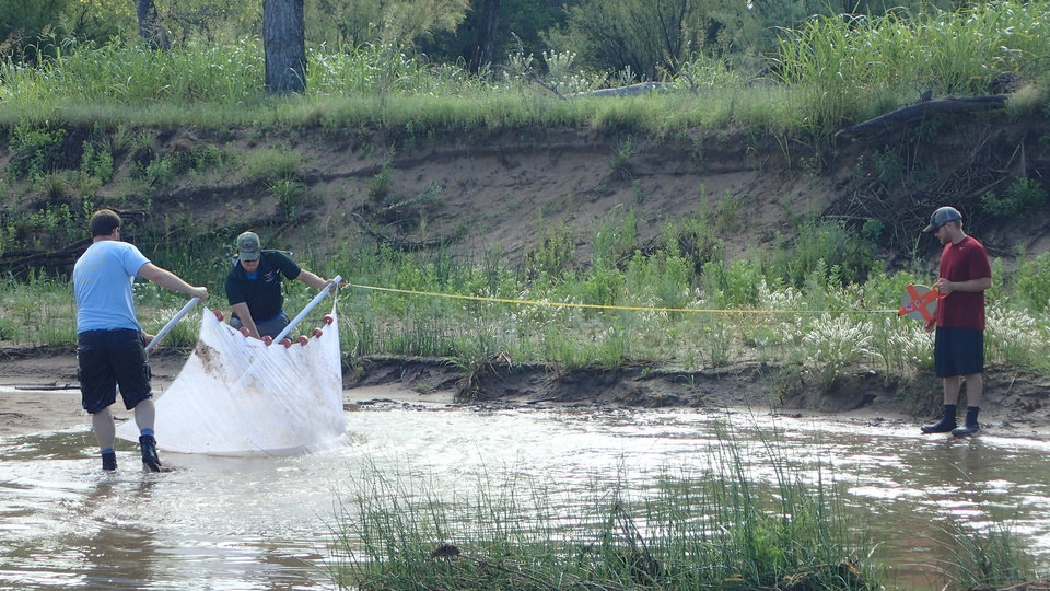 Photo -  Oklahoma Department of Wildlife conservation stream team staff conduct fish sampling in the North Fork of the Red River. [PHOTO BY TREVOR STARKS, ODWC streams technician]
