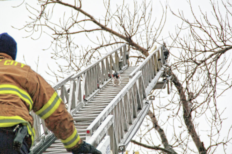 Alex Jr. scampers down a fire truck ladder to safety. Photo PROVIDED BY MIDWEST CITY FIRE DEPARTMENT