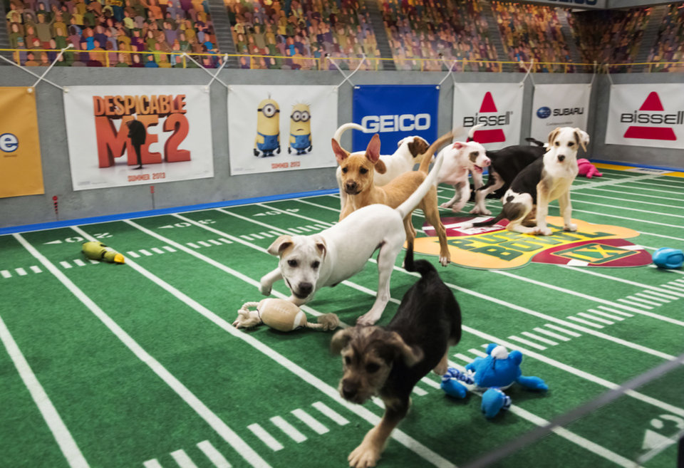 "This undated publicity photo provided by Animal Planet shows dogs playing on the field during ""Puppy Bowl IX,"" in New York. The �Puppy Bowl,� an annual two-hour TV special that mimics a football game with canine players, made its debut eight years ago on The Animal Planet. Dogs score touchdowns on a 10-by-19-foot gridiron carpet when they cross the goal line with a toy. (AP Photo/Animal Planet, Keith Barraclough)"