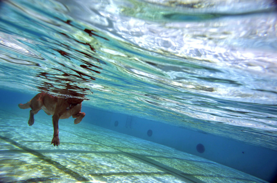 Photo - A dog swims at the annual Pooch Pool Party on Sunday at Westwood Water Park. PHOTOS BY SARAH PHIPPS, THE OKLAHOMAN
