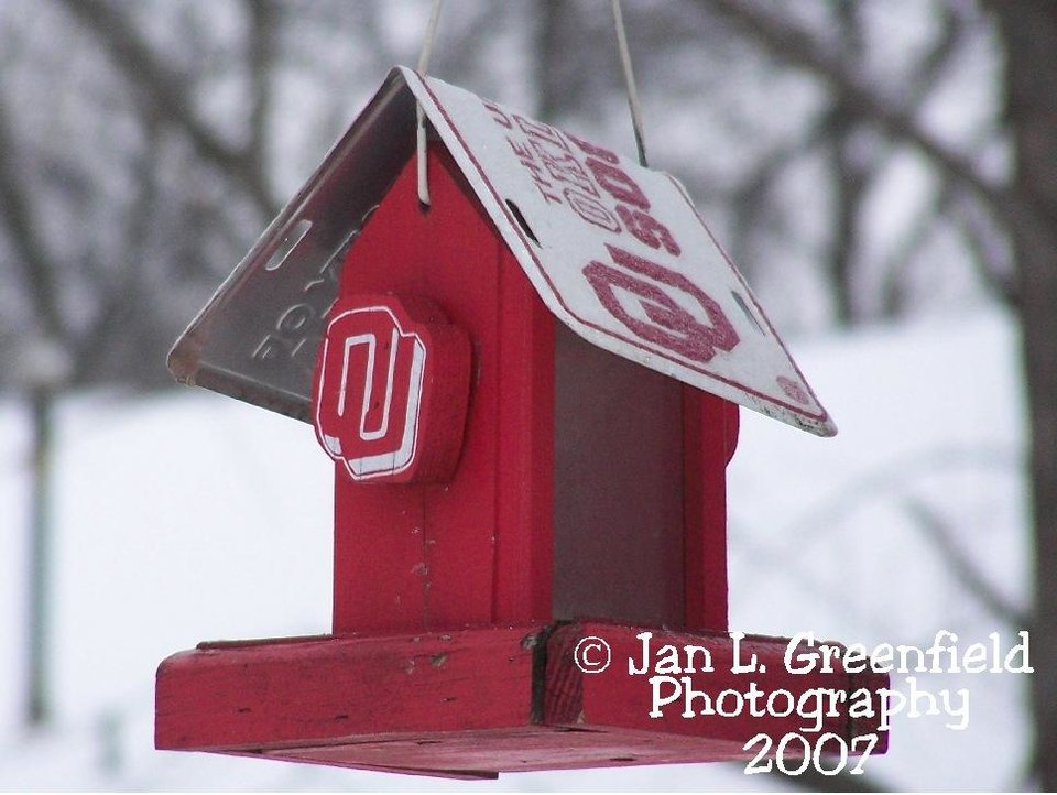 OU Birdfeeder during Ice Storm 2007, Chandler, OK<br/><b>Community Photo By:</b> Jan L. Greenfield<br/><b>Submitted By:</b> Jan, Chandler