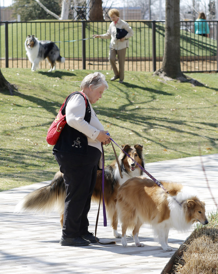 Photo - Rose Hutches from Springfield, Illinois, walks her rough collies, Auty and Fibber Maggee in the Myriad Botanical Gardens. Hutches is in town at the Collie Club of America dog show at the Cox Convention Center in  Oklahoma City, Wednesday, March 11, 2015. Photo by Doug Hoke, The Oklahoman