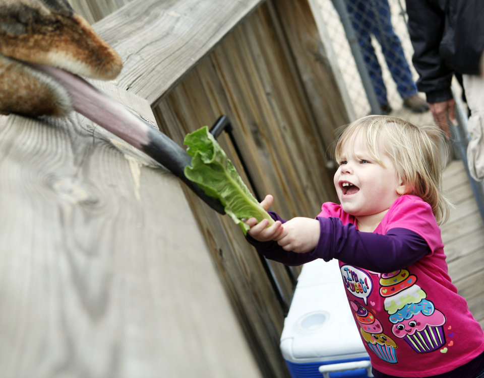 Photo - Three-year-old Cori Coats of Holdenville feeds a giraffe at the Oklahoma City Zoo on Saturday, March 22, 2014. The zoo drew large crowds Saturday as it was the final day of spring break for many Oklahoma public schools. Photo by KT King, The Oklahoman