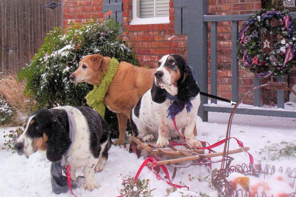 Bruiser, Walter and Emma enjoying the dog days of winter.<br/><b>Community Photo By:</b> Terri Wilkerson<br/><b>Submitted By:</b> Terri, Oklahoma City