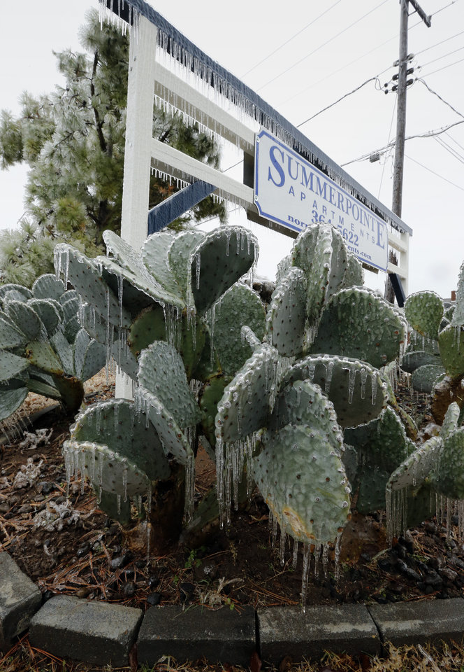 Photo - A thick coat of ice covers plants and exposed surfaces on the southeast side of the city on Saturday, Dec. 21, 2013 in Norman, Okla.  Photo by Steve Sisney, The Oklahoman