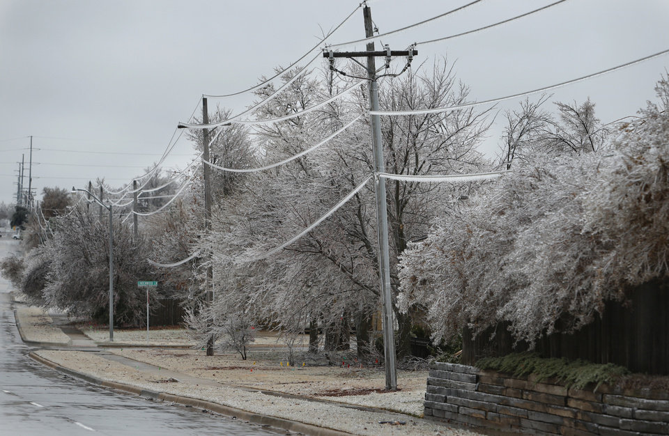 Photo - A thick coat of ice covers foliage along NE 24th Street on Saturday, Dec. 21, 2013 in Norman, Okla.  Photo by Steve Sisney, The Oklahoman