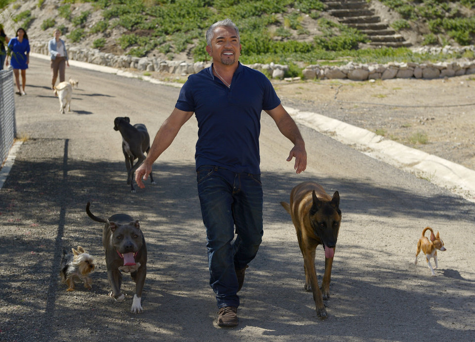 Photo -   In this Oct. 18, 2012 photo, Cesar Millan walks down to his horse stables with his dogs at his Dog Psychology Center, in Santa Clarita, Calif. At 13, his dream was to become the best dog trainer in the world. At 21, alone and unable to speak English, he crossed the border and lived on the streets for two months before getting a job as a groomer and walker. AP Photo/Mark J. Terrill)