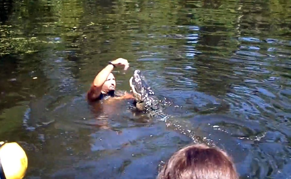 Photo - This screen grab from video released by Stacy Hicks shows an unidentified tour guide for Airboat Adventures swimming with and feeding alligators. (AP Photo/Stacy Hicks)