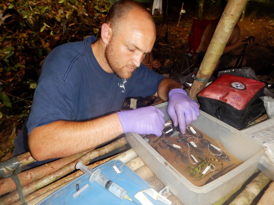Photo -  Cameron Siler, University of Oklahoma biologist, works to preserve voucher specimens for each species encountered during a survey on Samar Island.    PROVIDED -  Provided by Cameron Siler