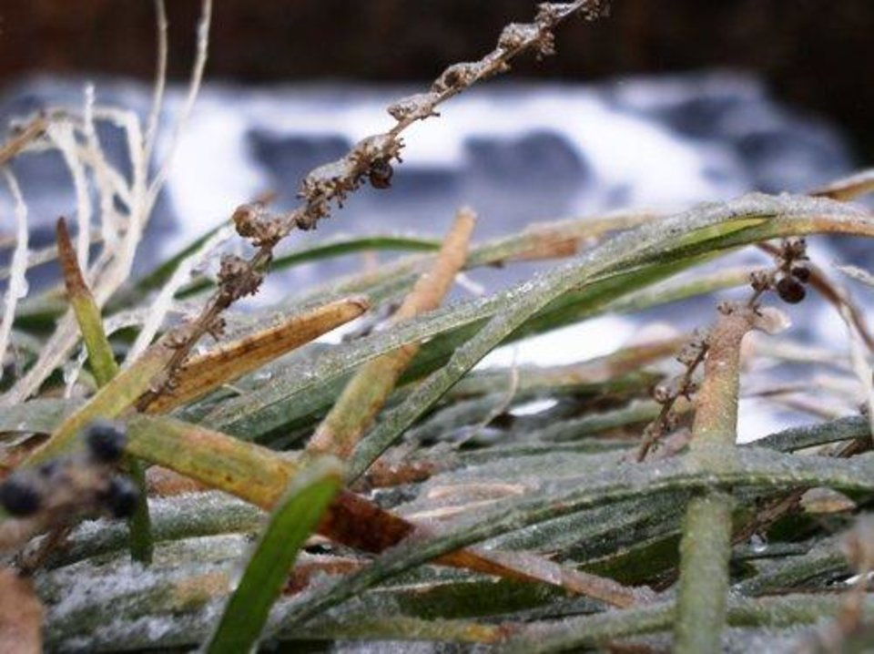 ice on the grass<br/><b>Community Photo By:</b> Gayle Campbell<br/><b>Submitted By:</b> Dan, Harrah