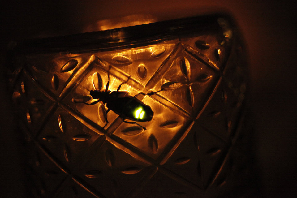 Fireflies or lightning bugs crawl around in the bottom of a drinking glass Tuesday, June 22, 2010. Photo by Doug Hoke