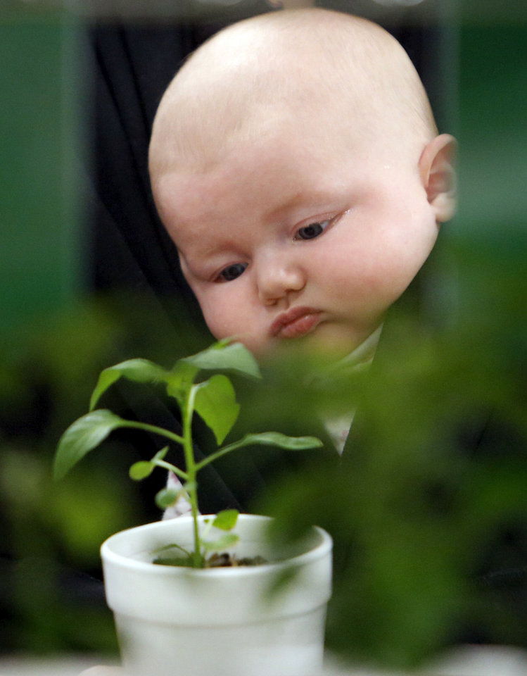 Sophie Cerato, 10 weeks, eyes a plant from her carrier as mother Amy Cerato shops Wednesday at the Norman Farm Market.