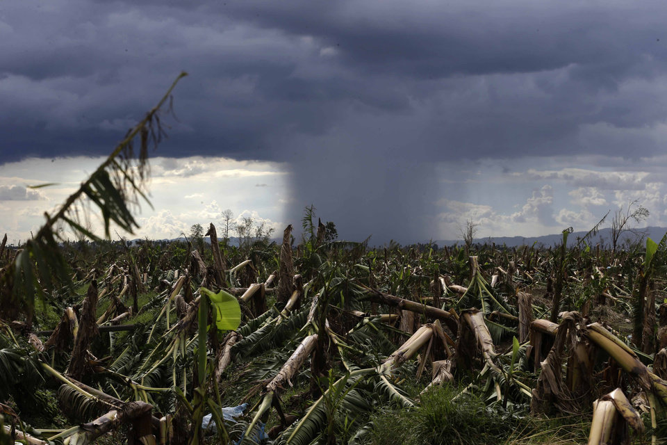 A rare cloud formation is seen amidst destroyed banana plantation four days after typhoon Bopha left hundreds of people killed and rendered extensive damage to agriculture at Montevista township, Compostela Valley in southern Philippines Saturday Dec. 8, 2012. Search and rescue operations following typhoon that killed nearly 600 people in the southern Philippines have been hampered in part because many residents of this ravaged farming community are too stunned to assist recovery efforts, an official said Saturday. (AP Photo/Bullit Marquez)