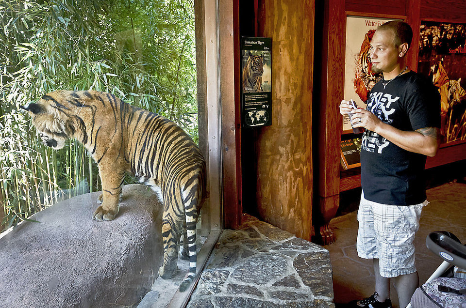 Tarl Johnson gets a closer look Friday at a Sumatran tiger at the Oklahoma City Zoo. Photo by Chris Landsberger, The Oklahoman