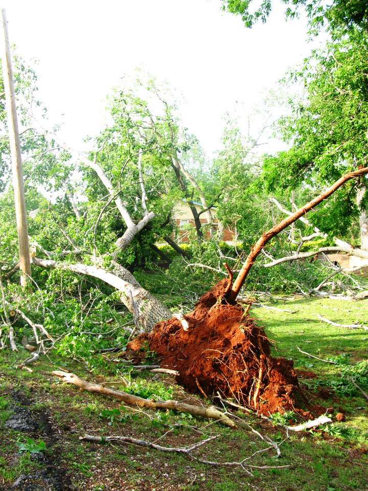Uprooted trees in the Hidden Valley addition in southeast Edmond. PHOTO BY LILLIE-BETH BRINKMAN, THE OKLAHOMAN <strong></strong>