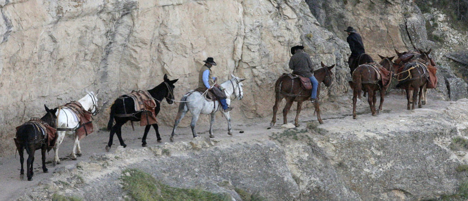 Photo - FILE - This Monday Oct. 22, 2012, file photo, shows a mule team walking along the Bright Angel Trail on the South Rim of the Grand Canyon National Park in Arizona. One of the most lucrative contracts in the National Park Service is going out to bid for a third time, after Grand Canyon found the previous bids unacceptable. The successful bidder will provide lodging, food, retail and transportation services as well as mule rides on the South Rim. Those services are expected to bring in nearly $1 billion in gross revenue over 15 years.  (AP Photo/Rick Bowmer, File)