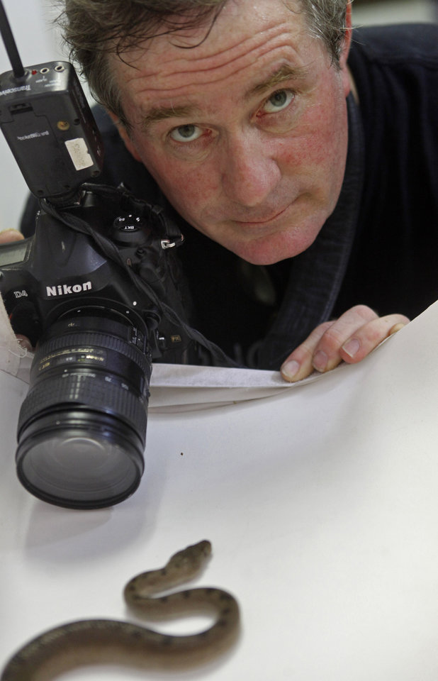 Photo -  Photographer Joel Sartore photographs a snake, an Abaco Island Boa, for the Photo Ark project at the Oklahoma City Zoo on July 27. Photo by K.T. King, The Oklahoman   KT King -