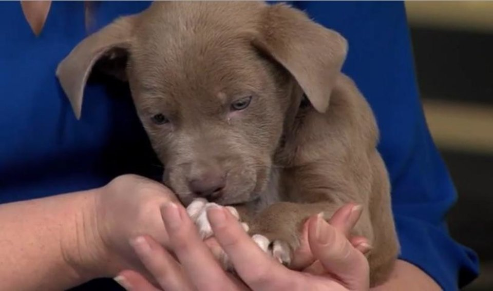 Photo - This two month old puppy is looking for a name and a home. He will leave Oklahoma on Friday headed to Minneapolis, part of OK Humane's relocation program.