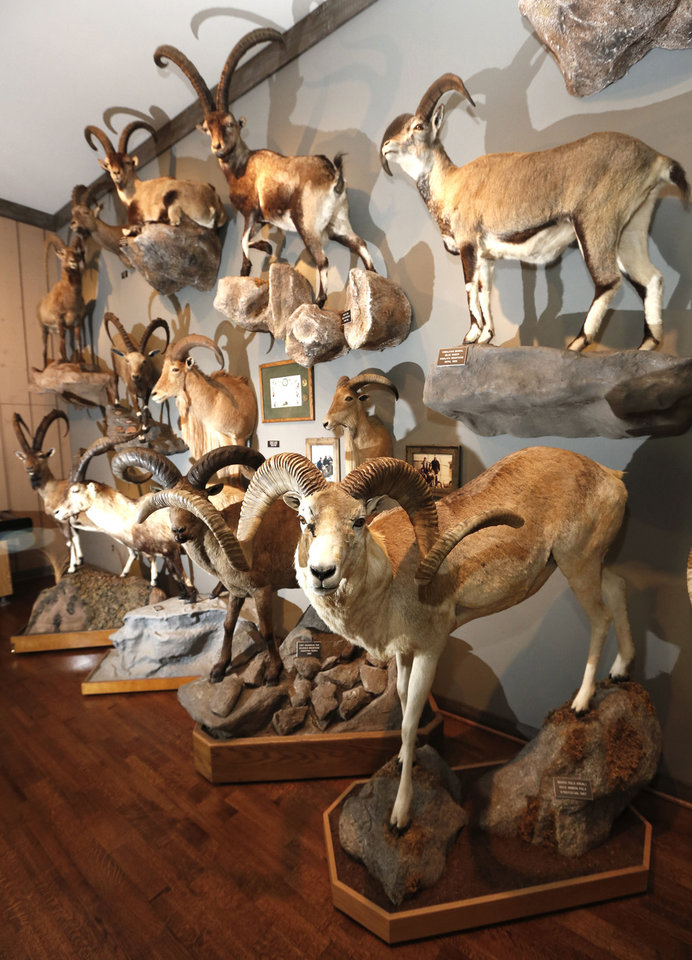 Photo - Bill Lockard's trophy room at his home in Oklahoma City, Wednesday July 31, 2013. Photo By Steve Gooch, The Oklahoman