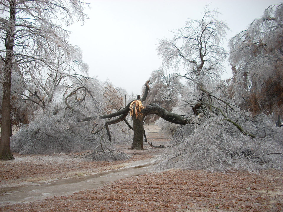 Mighty Oaks can fall-taken at Kiwanis Park, Midwest City<br/><b>Community Photo By:</b> Leonard Sparks<br/><b>Submitted By:</b> Leonard, Midwest City