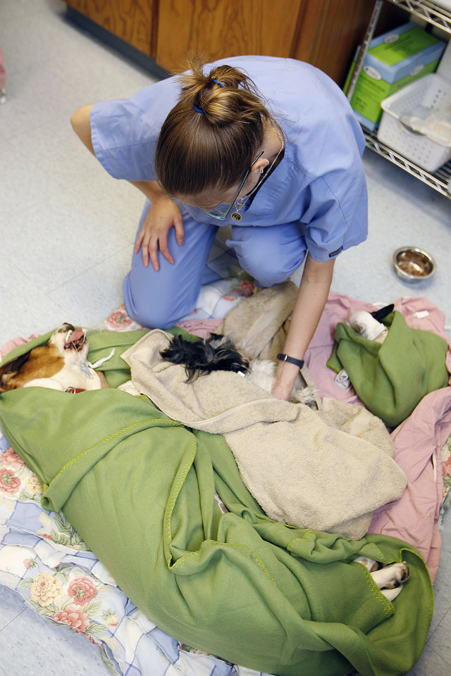 Photo - DOGS / SPAYING / NEUTERING: Veterinary assistant Andrea Osisek tends to