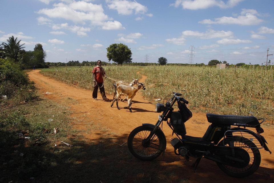 Photo - In this Dec. 5, 2012 photo, a villager walks past a motorcycle with her cattle, in village Karadigere Kaval, where three dalits were killed in a battle over the land in 1980, 85 kilometers (53 miles) from Bangalore, India. For years, Karnataka's land records were a quagmire of disputed, forged documents maintained by thousands of tyrannical bureaucrats who demanded bribes to do their jobs. In 2002, there were hopes that this was about to change. (AP Photo/Aijaz Rahi)