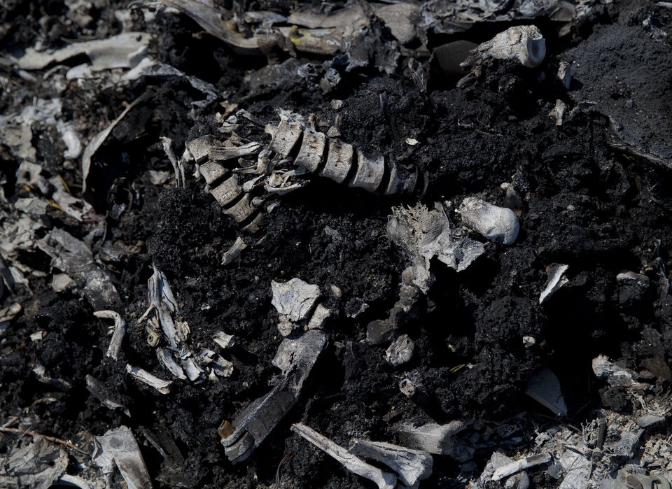 Photo - Charred bones are mixed with debris at the crash site of Malaysia Airlines Flight 17 near the village of Hrabove, eastern Ukraine, Sunday, July 20, 2014. Armed rebels forced emergency workers to hand over 196 bodies recovered from the Malaysia Airlines crash site and had them loaded Sunday onto refrigerated train cars bound for a rebel-held city, Ukrainian officials and monitors said .(AP Photo/Vadim Ghirda)