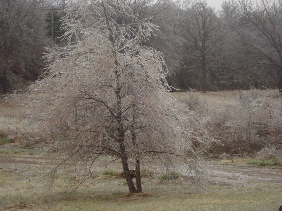 Ice Storm!<br/><b>Community Photo By:</b> Shawna Burton<br/><b>Submitted By:</b> Shawna, Guthrie
