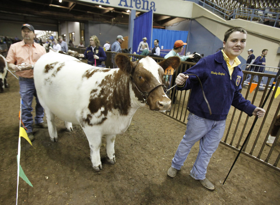 """Locust Grove student Wesley Burford prepares to take """"Miss Reba Montana"""" into the arena as family friend Steve Elam does some last minute touchup during the Oklahoma Youth Expo at State Fair Park in Oklahoma City, OK, Tuesday, March 13, 2012,  By Paul Hellstern, The Oklahoman"""