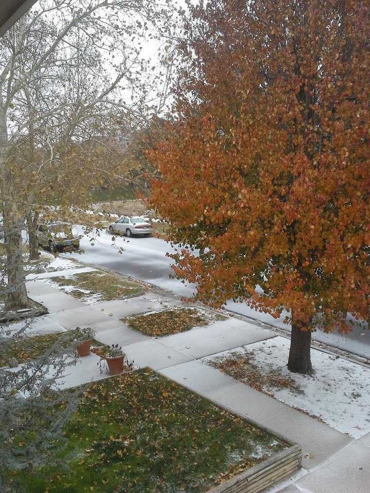 Photo - Sleet in Mesta Park in Oklahoma City. Photo by Michael Mayes