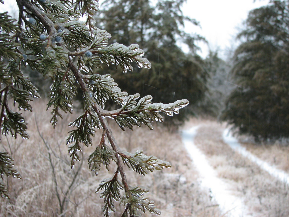 just a pretty cool pic of a cedar<br/><b>Community Photo By:</b> david kovelda<br/><b>Submitted By:</b> teresa, Lexington