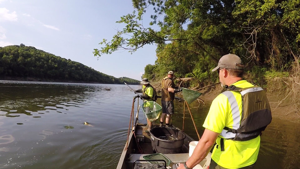 Photo -  Oklahoma Water Resources Board personnel electroshock the Neosho River in northeastern Oklahoma to collect fish. It's part of testing the agency does to assess the health of streams in the state. [PHOTO PROVIDED BY OWRB]