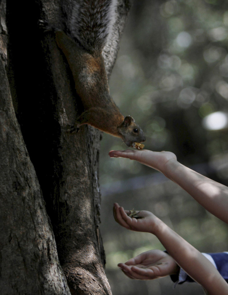 Photo -   People feed a squirrel at the Chapultepec Park in Mexico City, Sunday, Nov. 18, 2012. Chapultepec is a park divided between shady stretches of forest and more-developed plazas, fountains and sculpture gardens. On weekends, the northern end is crammed with vendors, entertainers and families out for the day. (AP Photo/Marco Ugarte)