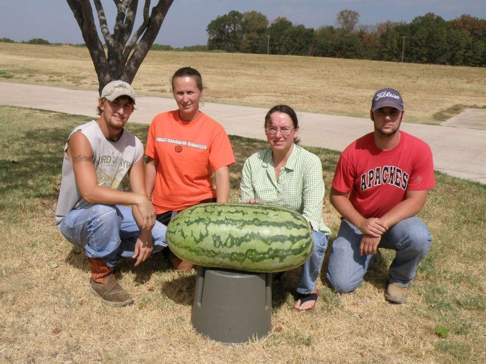 Photo - An eighty-four pound watermelon grown at the USDA Wes Watkins Agricultural Research Lab in Atoka by the Genetics Department.  From left to right, Cody Sheffield, Amy Helms, Dr. Angela Davis, and Michael Mobbs, who works for Dr. Charles Webber.
